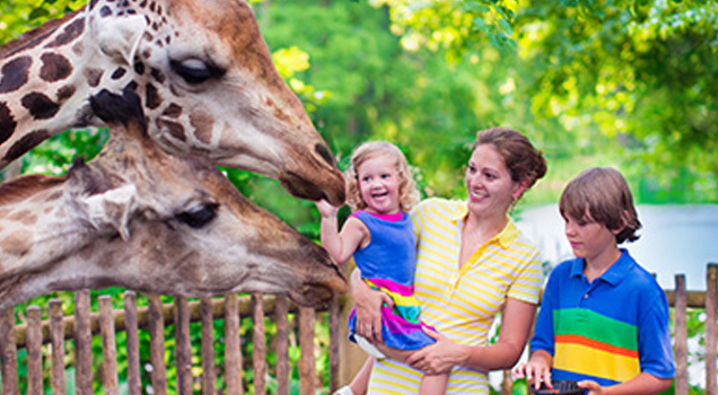 Knoxville Zoo at Tennessee